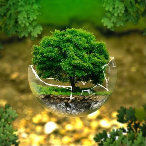 Cómo probar un delito ambiental